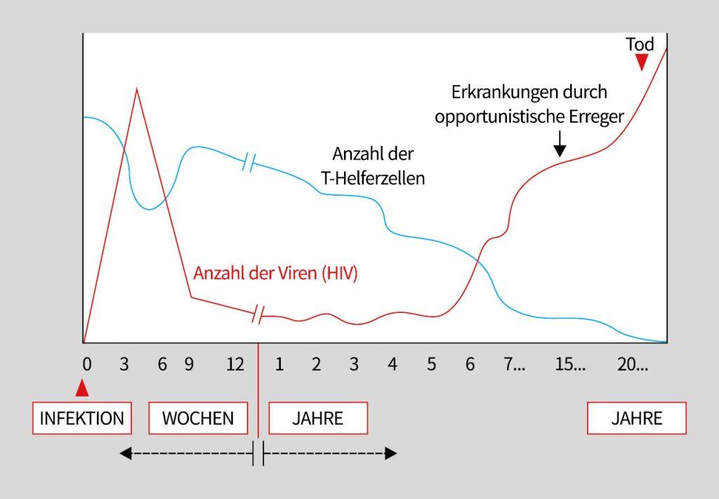 Grafik zeigt anhand einer Kurve den Verlauf einer HIV-Infektion ohne Behandlung
