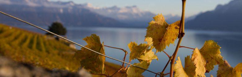 Berge im Hintergrund, Herbstlaub und Weinberge gibt es auch an der Röhn